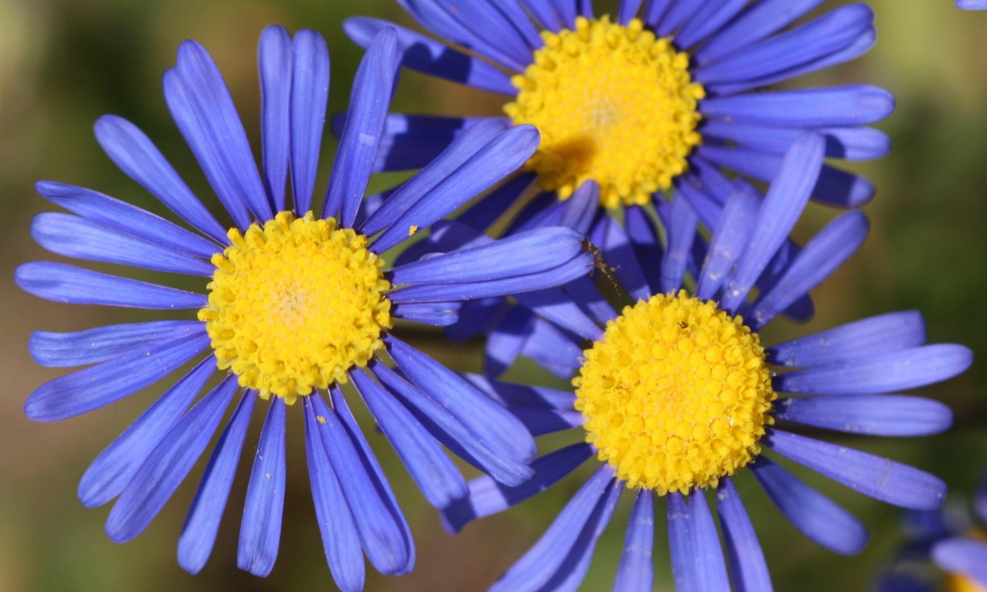 Darling Wildflower Society